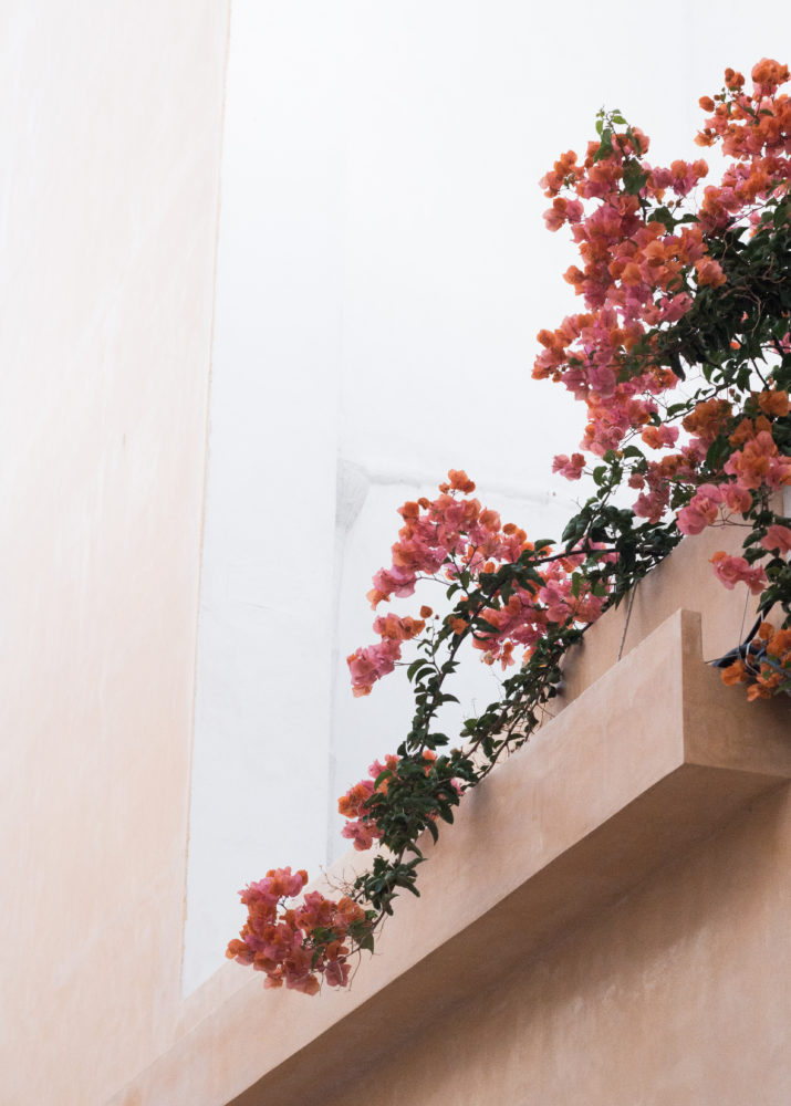 menorca flores