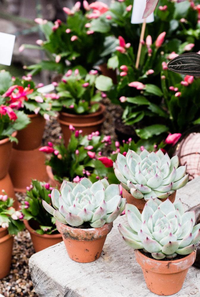 estocolmo rosendals plantas